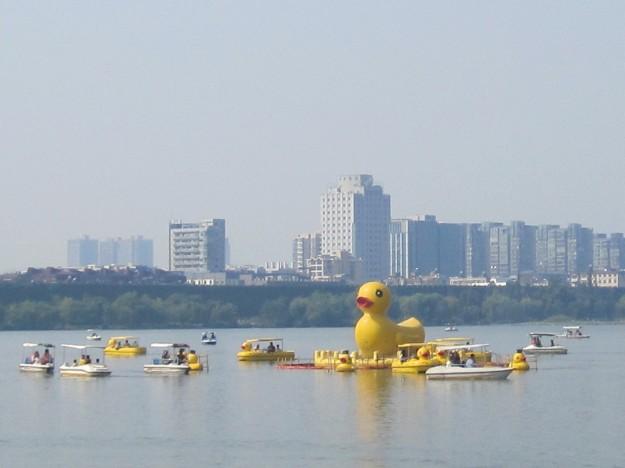 Enjoying life in a duck on Xuan Wu Lake.
